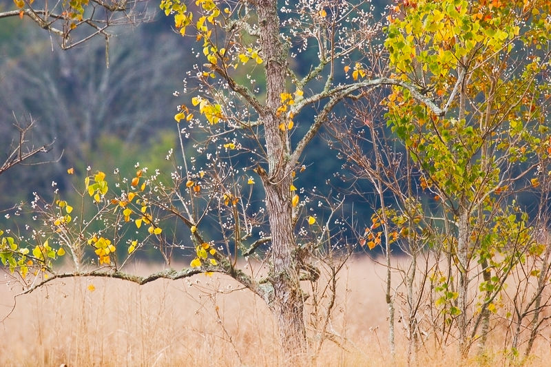 Autumn Trees in the low country