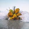DSC07169 David Scarola Photography, Jupiter Beach Coconuts, Jupiter Florida, sep 2017 copy