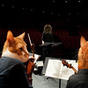 Caterwaul Philharmonic