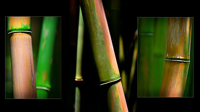 Haleakala Bamboo Collage