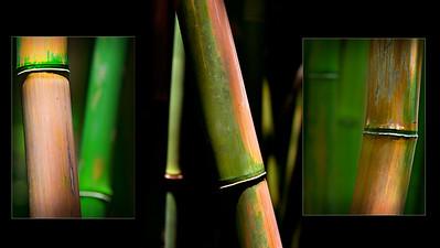 Haleakala Bamboo Collage