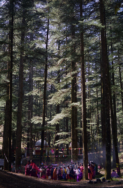 L1027 Deodar trees, Shiva and Divine Mother temples at Tarkeswar