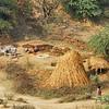 L1307 Making dung patties, Allahabad