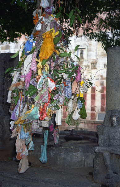 L2371 Wishing tree, for giving birth favorably. Tiruvanamalai