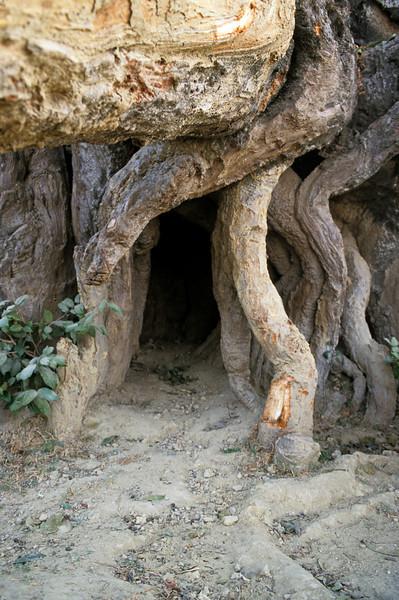 L1927 Tree cave. 2001 Kumbha Mela, Allahabad
