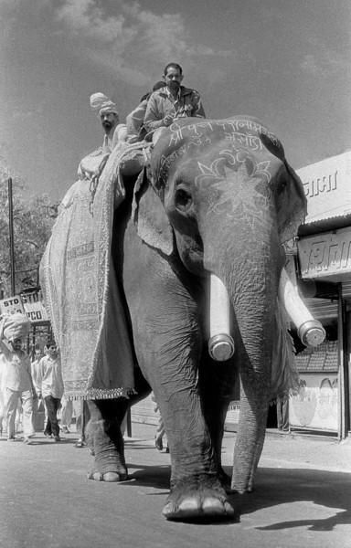 L2173 Elephant on parade, 1998 Kumbha Mela, Hardwar