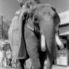 L2173 Elephant on parade, 1998 Kumbha Mela, Hardwar