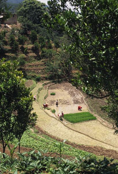 L1544 Farming