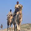 L1246 Camels
