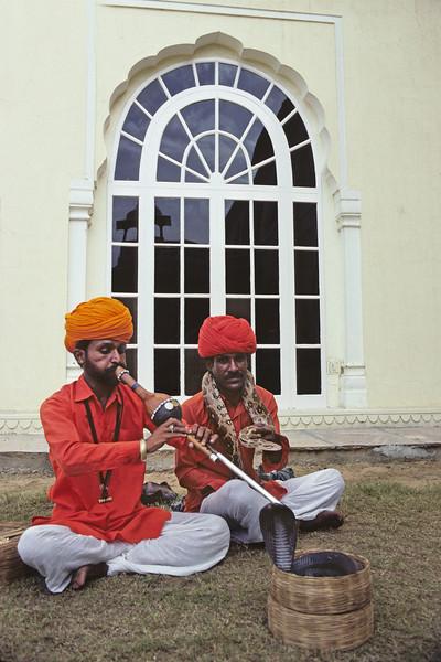 L1708 Cobra and python. Jaipur