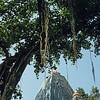 L1429 Virbhadra Temple, Rishikesh