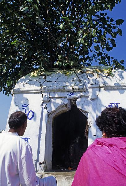 L1432 Temple with pipal tree near Virbhadra site, Rishikesh