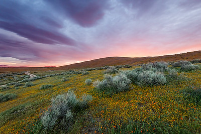 Antelope Valley Poppy Preserve Sunrise