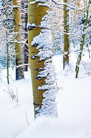Hope Valley Aspen in Winter #2