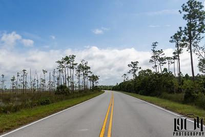 Road through Everglades National Park