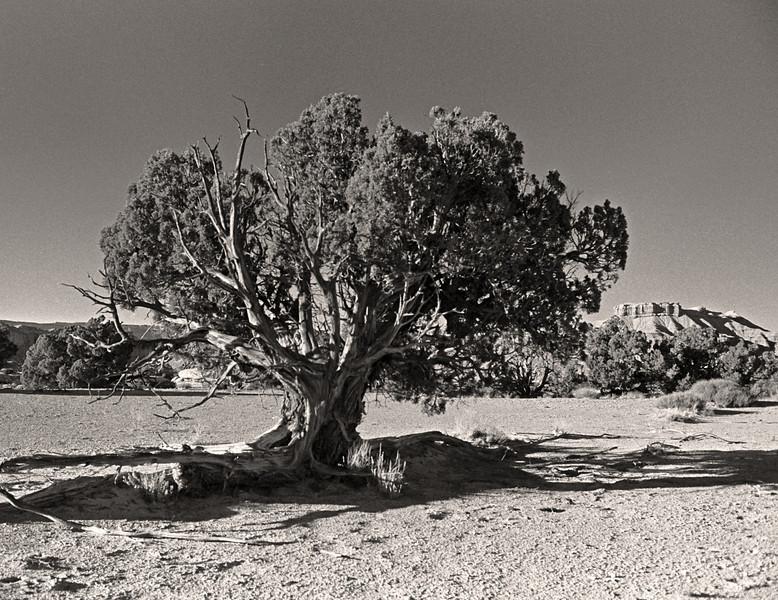 L6347 Utah dry country