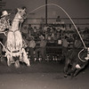 L6268 Calf Roping. North Dakota State Fair, Williston