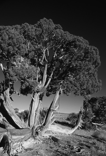 L6357 Utah dry country