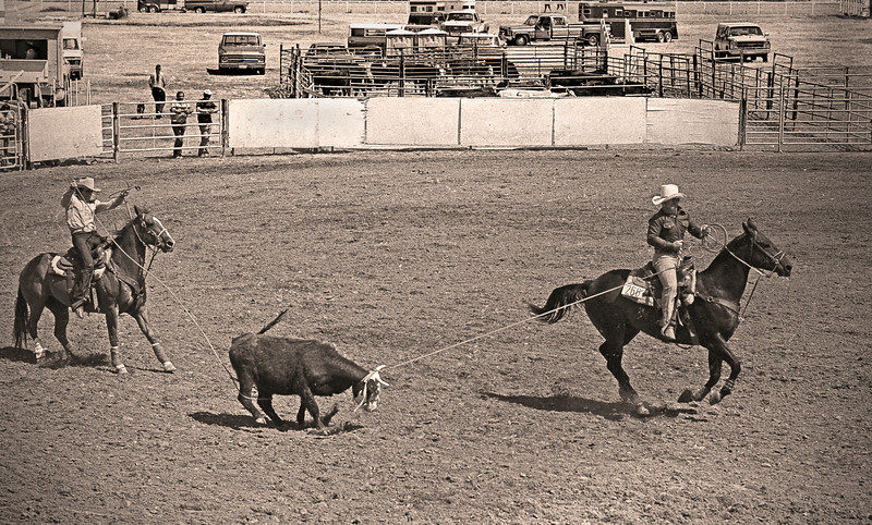L6169 Heading and Heeling. Perfect catch and shot. Great Falls, Montana