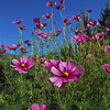 L6140 flowers