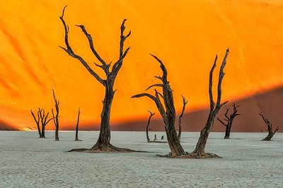Dead Vlei Camel Thorns