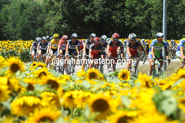 Saxo Bank and Schleck are right behind Shack and Armstrong as more sunflowers appear...