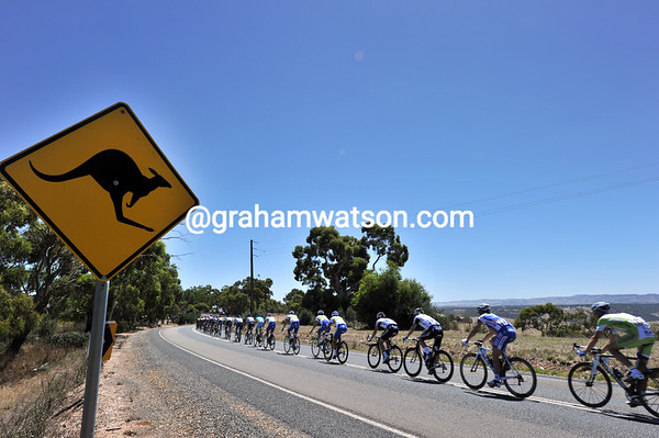 Skippy the Kangaroo sees a peloton screaming after the five-man escape...