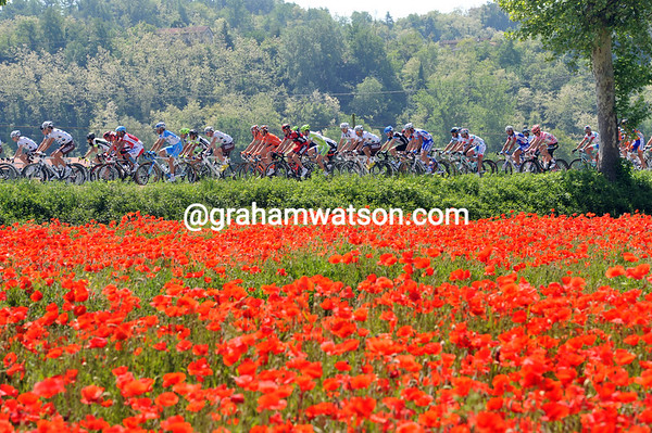 The peloton is hardly as fiery as these flowers - they're now going slower and slower...