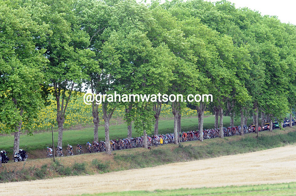 The peloton races through an alleyway of plane trees in the Tarn region...