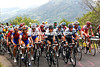 The climbers mass near the front of the peloton - the Tour de France is in the hills of Massif Central..!