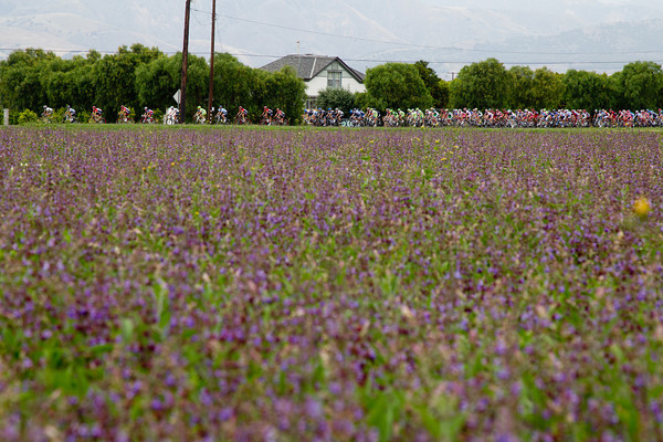 The peloton keeps the gap steady as they pass a field of flowers.