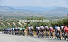 The peloton isn't chasing too hard as it heads into the olive groves...
