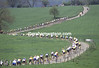 The peloton in the Amstel Gold Race