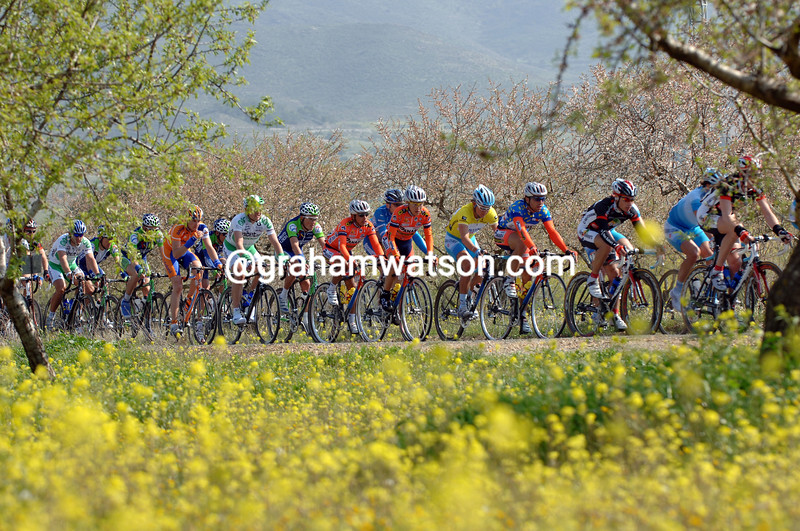 Spring colours for the 2006 Tour of Murcia cyclists…