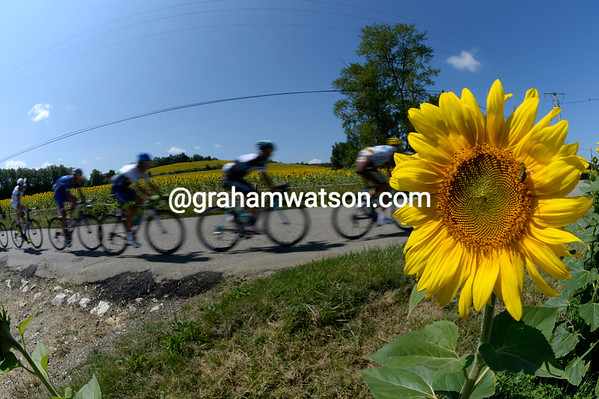 A sunflower watches an escape go by on a bright and sunny day...
