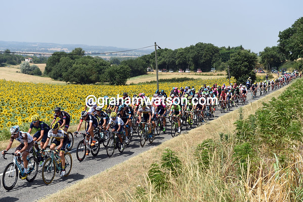 It's a sunflower sort of day as the peloton chases the day's first escapers...