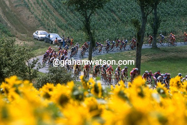 The peloton on a stage of the 2001 Tour de France