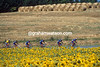 The US Postal team in the 2001 Tour de France