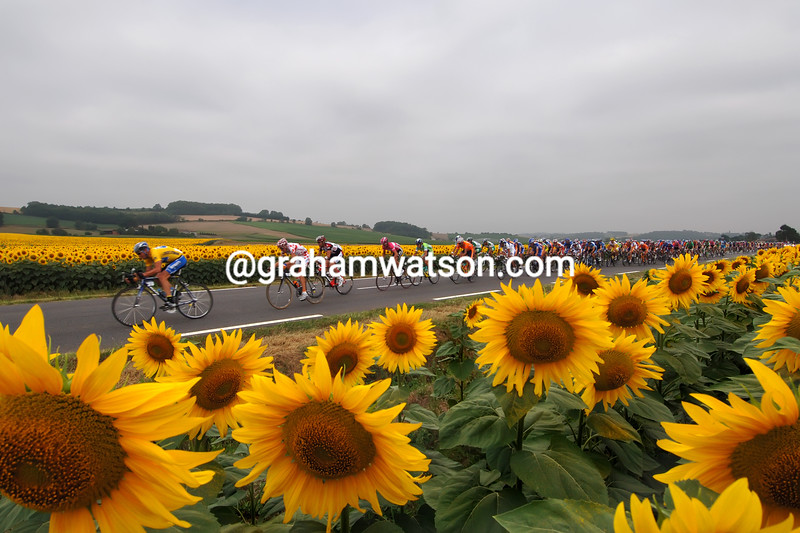 Lance Armstrong leads the 2005 Tour de France past sunflowers on a stage to the Pyrenees