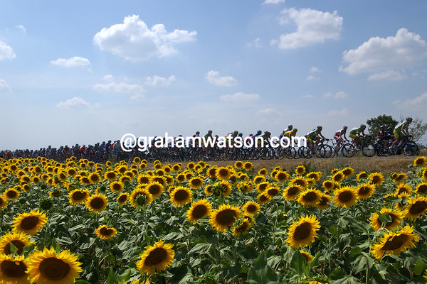 The 2006 Tour de France passes sunflower fields on a stage to Beziers