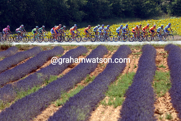 The peloton races past lavender and sunflowers on a stage of the 2006 Tour de France