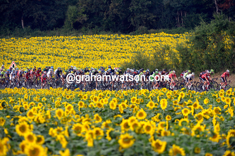 The peloton on stage nineteen of the 2014 Tour de France