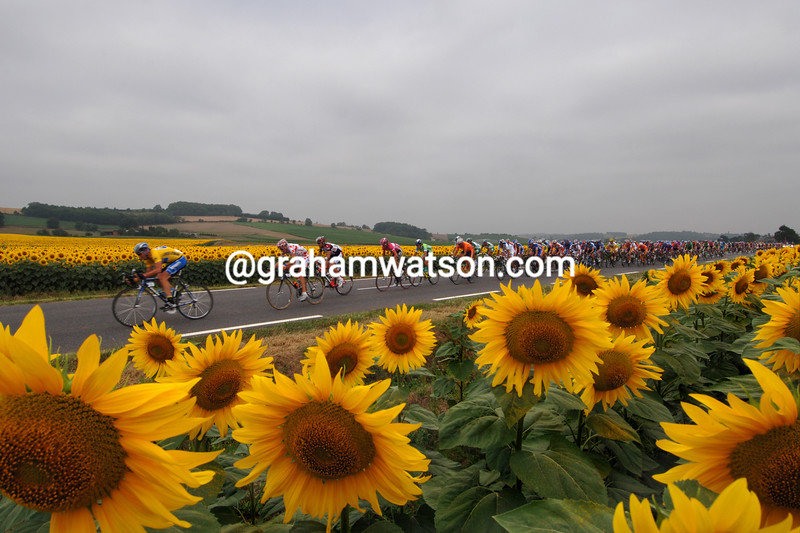 2005 Sunflowers