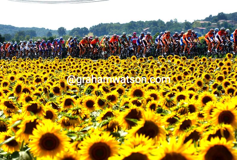 The peloton in the 2006 Tour de France