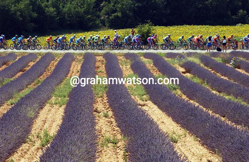 2006 Provence Lavender
