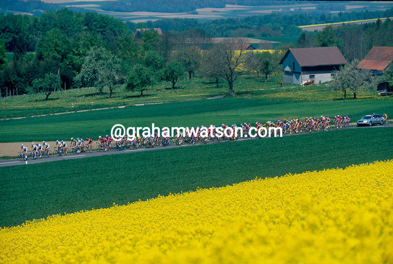 The peloton passes rapeseed flowers on a stage of the 2000 Tour de Romandie