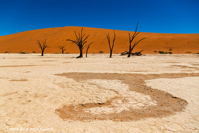 The Magical Deadvlei