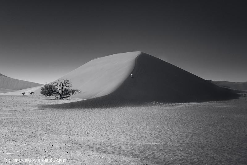 The Dune 45