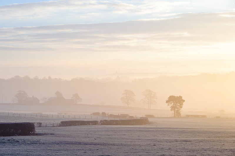 Frosty Morning Mist