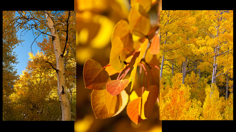Fall Aspen Collage